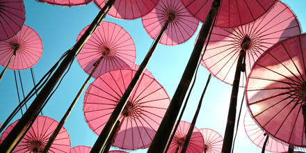 Image shows pink umbrellas