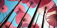Image shows pink umbrellas